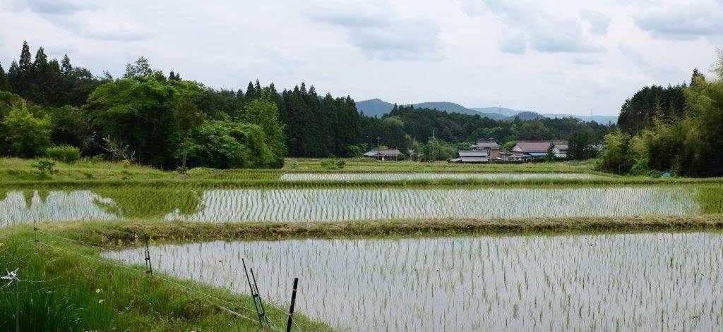 杉之沢地区の田園風景の写真