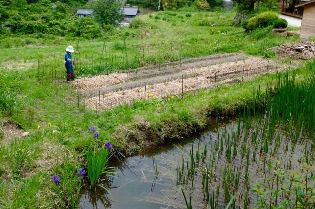 田んぼの溜池と畑の写真