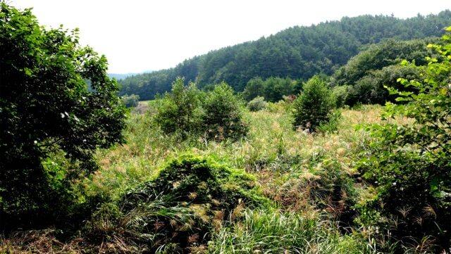 山に還りつつある田んぼの写真