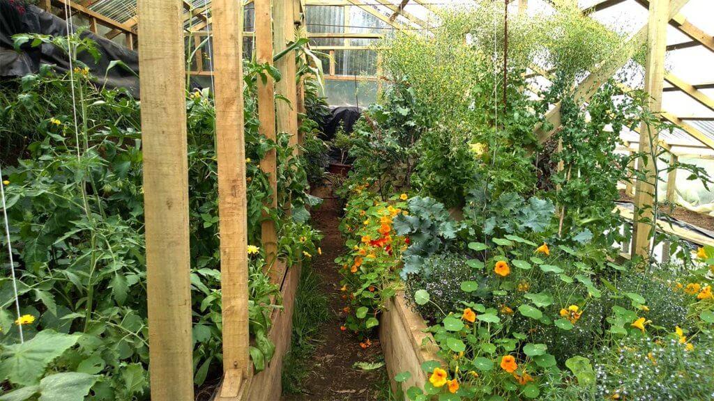 我が家のワリピニ(地下温室)写真